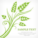 Stylized ears of wheat in green Royalty Free Stock Photography
