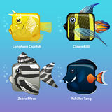Stylized fish are square. In vector, Clown killi, Longhorn Cowfish, Zebra Pleco, Achiles Tang Royalty Free Stock Photo