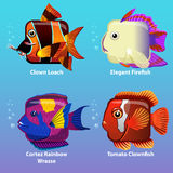 Stylized fish are square. In vector, Clown Loach, Elegant Firefish, Cortez Rainbow Wrasse, Tomato Clownfish Royalty Free Stock Photography