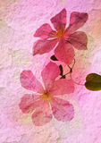 Stylized Floral Picture Royalty Free Stock Photography