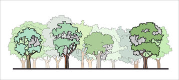 Stylized forest. Vector illustration of forest stylized drawing Stock Photos