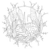 A stylized frog sits among the reeds. Sketch for adult anti-stress coloring.  Stock Photos