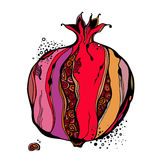 Stylized garnet or pomegranate. Vector. Color stylized garnet or pomegranate. Vector illustration Stock Photography