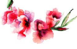 Stylized Gladiolus flowers. Watercolor painting Stock Images
