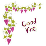 Stylized graphic image of a vine with grapes. Royalty Free Stock Photos