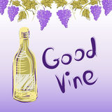 Stylized graphic image of a vine with grapes. Stock Photos