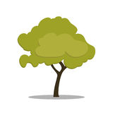 Stylized green tree in cartoon style. Vector isolated on white background. Stock Image