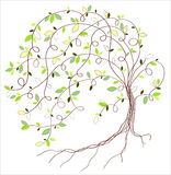 Stylized green tree Stock Image