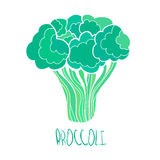 Stylized hand drawn broccoli illustration. Vector stylized hand drawn broccoli illustration on white background Stock Photos