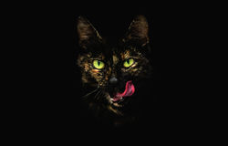 Free Stylized Head Of Tabby Cat With Protruding Tongue And Shiny Green Eyes. Royalty Free Stock Photo - 97732795