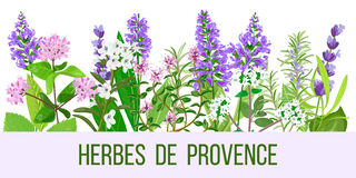 Stylized herbal backgrounds in wide-screen format Stock Photos
