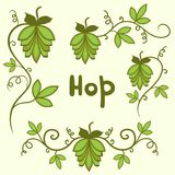 Stylized hops set Royalty Free Stock Images