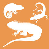 Stylized icon of lizard chameleon and iguana in white on a color Royalty Free Stock Photo