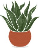 Stylized agave plant in Mexican terra-cotta pot. Stylized illustration of an agave plant in a Mexican terra-cotta pot with subtle decorations.  Isolated on white Stock Image