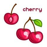 Stylized illustration of fresh cherry on white Stock Photos