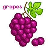 Stylized illustration of fresh grapes on white Royalty Free Stock Photo