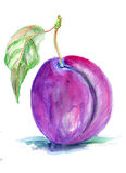 Stylized illustration of plum Stock Photos