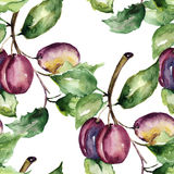 Stylized illustration of plum Stock Photography
