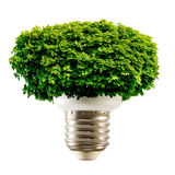 Stylized image of the lamp and the crown of the tree on a white background Royalty Free Stock Photo