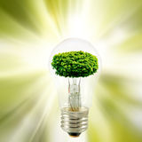 Stylized image of a tree in a light bulb on a green background closeup Royalty Free Stock Photos