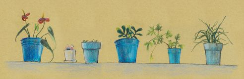 House plants in blue pots. Color pencils hand drawn illustration stock image