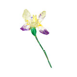 Stylized iris isolated Stock Images