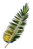 Stylized jungle foliage Stock Photo