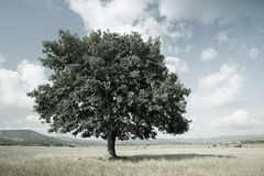 Stylized landscape with a tree in the meadow Royalty Free Stock Photography