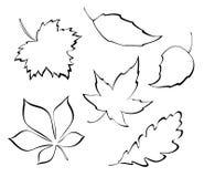 Stylized leaves. Falling leaves - stylized design elements Royalty Free Stock Photo