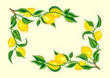 Stylized lemon branch corner frame. A stylized lemon branch corner frame in light  yellow background Royalty Free Stock Photography