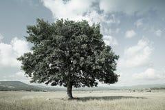 Stylized liggande med en tree i ängen Royaltyfri Fotografi