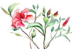 Stylized Malva flower. Watercolor illustration Royalty Free Stock Image