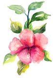 Stylized Malva flower. Watercolor illustration Stock Photo