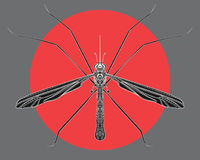 Stylized mosquito. Insect with ornaments. Linear Art. Vector illustration of a mosquito. Zentangle. Pest. Bloodsucker. Stylized mosquito. Insect with ornaments Royalty Free Stock Photos