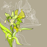 Stylized narcissus flowers. Universal template for greeting card, web page, background Royalty Free Stock Image