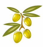 Stylized olives symbol isolated illustration Royalty Free Stock Images
