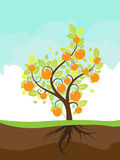 Stylized Orange Tree Stock Images