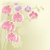 Stylized orchid Stock Photos