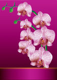 Stylized orchid Stock Photo