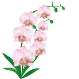 Stylized orchid Royalty Free Stock Photography