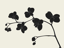 Stylized orchid branch Stock Image