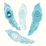 Stylized peacock feather.Vector set. Stock Photography