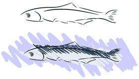 Stylized pilchard vector illustration