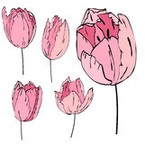 Stylized pink tulips isolated on white Stock Photography