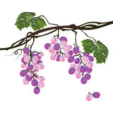 Stylized polygonal branch of purple grapes Royalty Free Stock Photography
