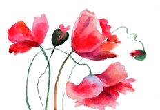 Stylized Poppy flowers Stock Photos