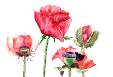 Stylized Poppy flowers illustration Stock Images