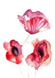 Stylized Poppy flowers illustration Stock Photography