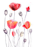 Stylized Poppy flowers illustration Stock Photo