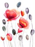 Stylized Poppy flowers illustration Royalty Free Stock Image